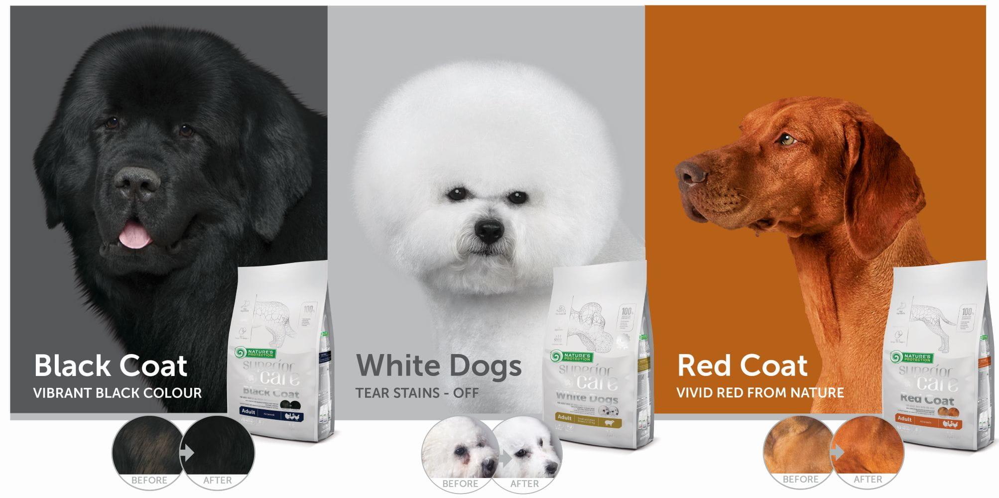 White-dogs_Black-coat_Red-coat_EN